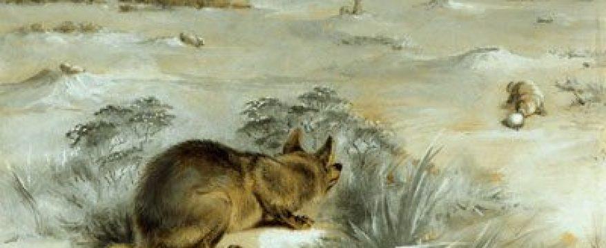 Illustration of Lobo, The King of Currumpaw